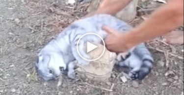 Cute Cat Refuses To Go Home. OMG. Watch What Happens When Her Human Tries To Pick Her Up