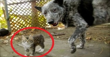 Disabled Kitty Makes Friends With Dog. WOW. What a Great Story.