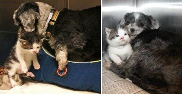 dog and adopted kitten rescued