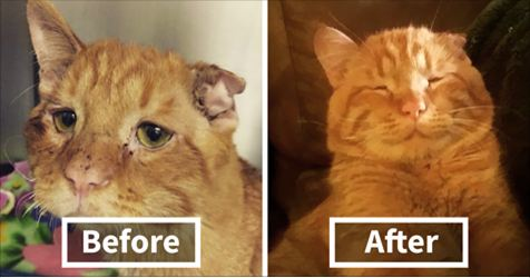 Couple Adopts 'Saddest Cat' Waiting To Be euthanized , Here's How Cat Transformed In Only One Hour