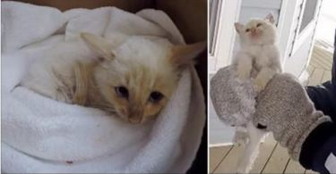Frozen Nearly Dead Kitty , Rescued By Kind Family