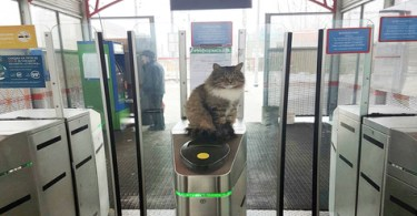 cat controller appeared at the railway station