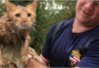 After 7 Hours Trapped In Drainpipe, Cat Is Finally Saved
