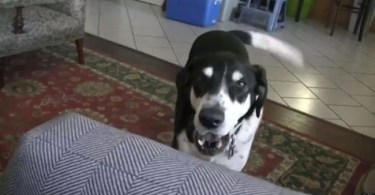 Dog Gets Really Excited When Heard That His Family Is Getting a Kitten