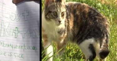 ransom for kitten
