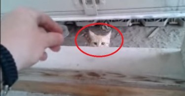 Tiny Stray Kitten Finally Let Her Rescuer To Per Her, After Feeding Her For One Month