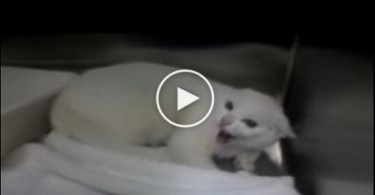Angriest Cat Freaks Out At The Vet. Must Watch