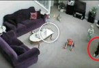 Brave Cat Defends Little Baby From Babysitter. You Must See This !