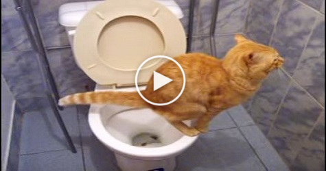 Cat Using Toilet Like A Real Human. How Is This Possible ? Must Watch !