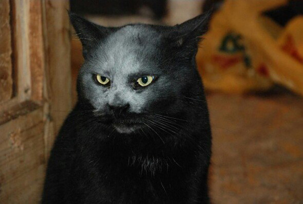 Black Cat Looking Like a Real Demon, Just Got Covered In Flour