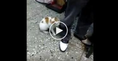 Brave Cat Attacks A Father Pretending To Abuse The Kid. Very Protective Kitty !