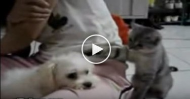 Cat Provoking and Punching a Peaceful Dog. The Dog`s Reaction Is Shocking !