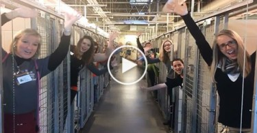 Shelter Celebrates Empty Shelter After All Cats And Dogs Were Adopted