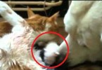 Kind Dog Helps Cat To Give Birth To Tiny Cute Kittens. Heartwarming Video.