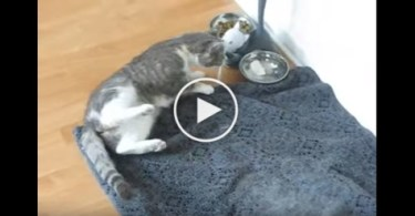 Have You Ever Seen A Drunk Kitty ? Cute Video !