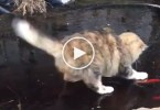 Cute Cat Trying To Catch Fish Under Frozen Lake. Hilarious Video !