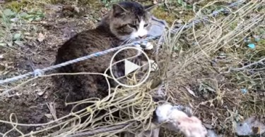 Kind Humans Rescued a Cat Tangled in Fence. You Have To See This ..