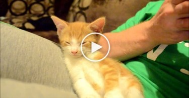 Sleepiest Kitten Ever Will Melt Your Heart. Cuteness Overloaded.