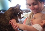 Cute Baby Petting Kitties For The First Time. Cute Video !