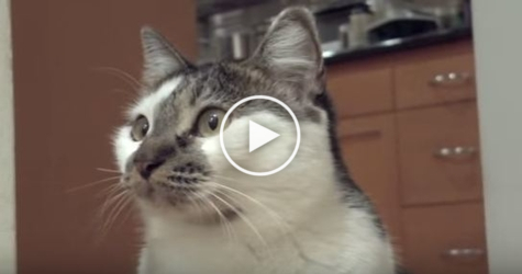 "This Smart Kitty Saying "" I Don`t Know "" . Unbelievable Video !"