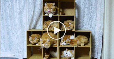 5 Star Kitten Hotel Will Keep Your Kitties Busy All Day