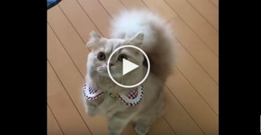 You Have To See The Cute Cat With Squirrel`s Tail. Really Amazing !