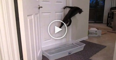 Will This Tub Of Water Stop The Cat From Opening The Door ?