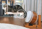 Musical Cat Showing His Amazing Drum Playing Skills