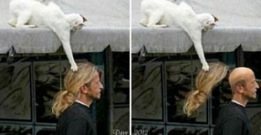25 Photos Proving Kitties Are Master Thieves