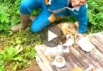 When You See What This Cat Did To These Fishermen You Will Burst Into Laughter