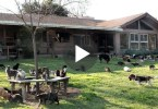 Real Cat Lady Is Living With 1000 CATS, But Wait Till You See Inside The Home ... WHAT ???