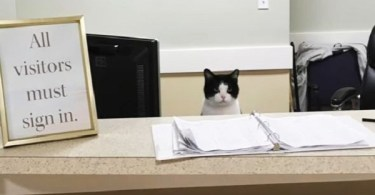 This Rescue Cat Found A Perfect Job In Nursing Home