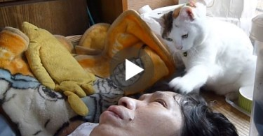 Cat Trying All His Best To Wake His Human. Daddy Is Not Happy About That