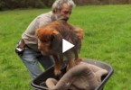 dog chained for 13 years
