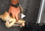 Kitten Wants To Play And Doesn`t Allow This Man To Change The Tire. Sweet Video !