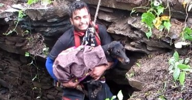 When This Dog Noticed That Rescuers Are Finally Here To Save Her, She Didn`t Stop Sobbing