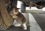 clinging kitten