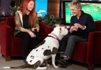 Rescue Dog Steals The Hearts Of The Audience In Ellen`s Show