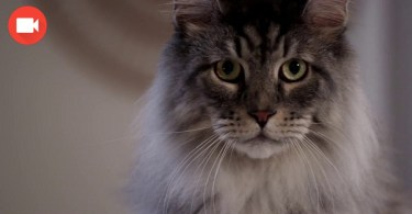 This Funny Litter Box Commercial Will Make You Burst Out laughing ! LOL !