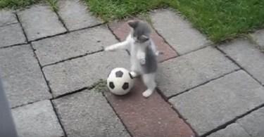 kitten football