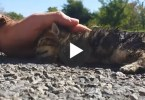 They Found This Poor Nearly Dead Kitten On The Road, Then Something Miraculous Happened ...