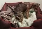 Neglected Dog Feels The Softness Of His Very First Bed. He Couldn`t Stop Wagging His Tail !