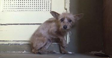 Amazing Transformation Of Rescued Terrified Abandoned Dog