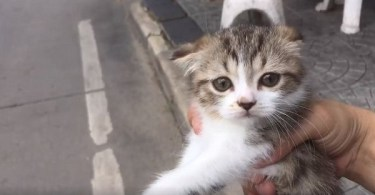 Rescued Three-Legged Kitten Had Difficulties With Walking, But See Her Amazing Adventure With Her Rescuer!