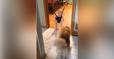 Mommy Took The Camera And Caught The Dog Teaching The Baby To Jump