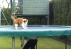 Cat Loves Playing And Jumping On The Trampoline