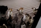 Man Enjoys The Perfect Cat Chorus Every Day!