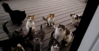 Man Enjoys The Perfect Cat Chorus Every Day!