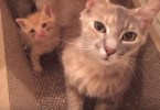 Sad Brokenhearted Cat Never Lost Her Motherly Instinct And Adopts An Orphaned Kitten