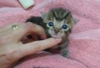 Tiny Kitten Meowing For The First Time Sounds Like A Duck